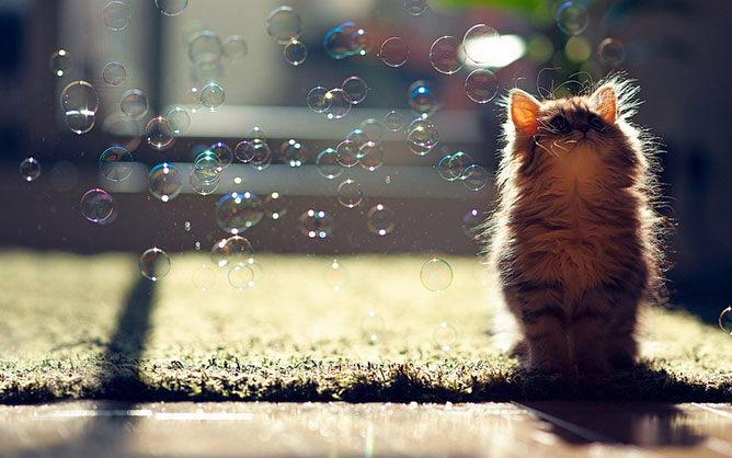 Cat-playing-with-bubbles.
