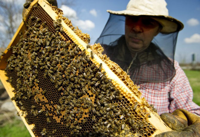 Méhcsalád.