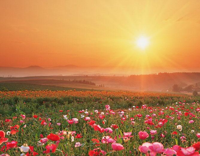 Virágos mező a ragyogó napsütésben.