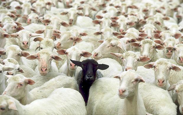 Fekete bárány.