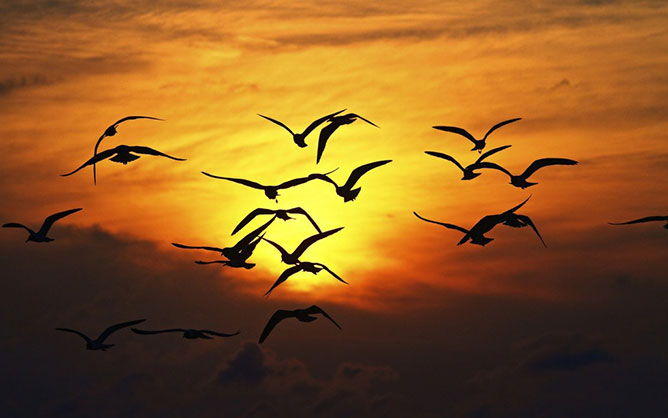 birds in sunset.