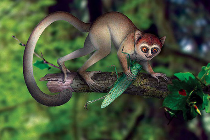 Fákon élő főemlősök.