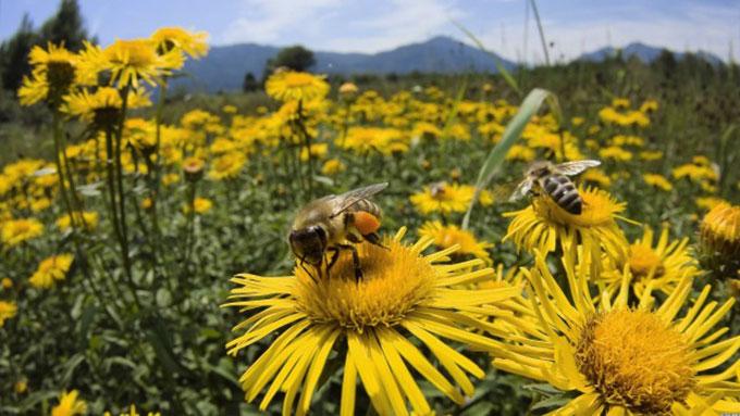 dolgozó méhek.