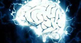 Il cervello nello sviluppo