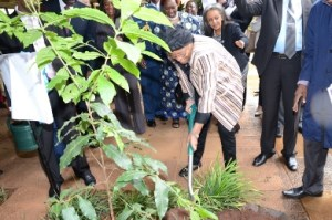 Liberian President plants a tree at UNON complex