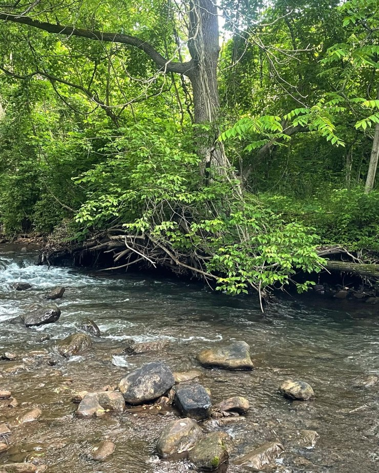 AMD impaired brook trout stream.