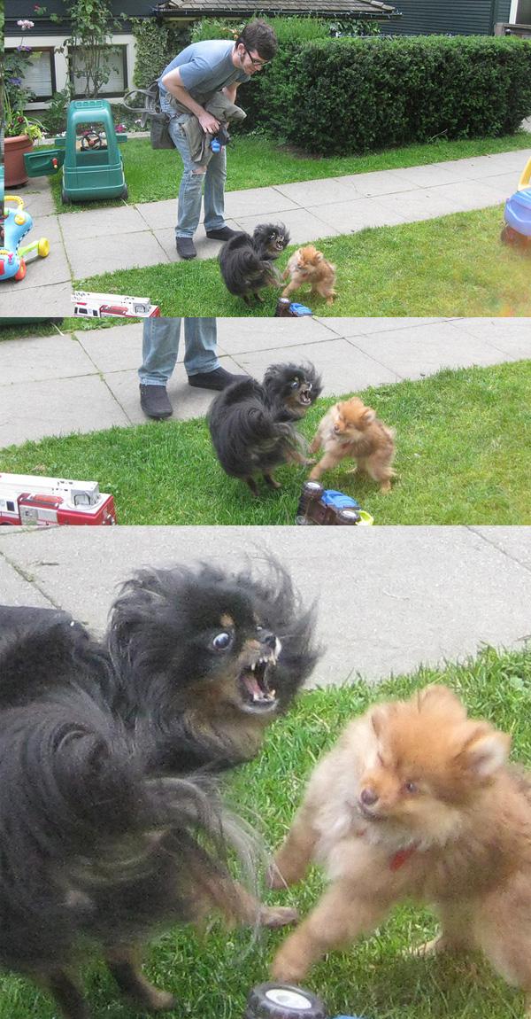 dogtriptych