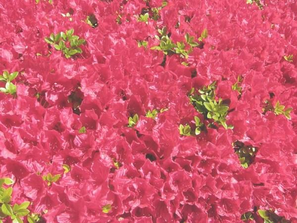15redflowers