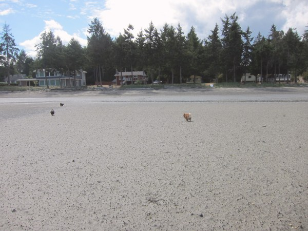 03 dogs on the beach