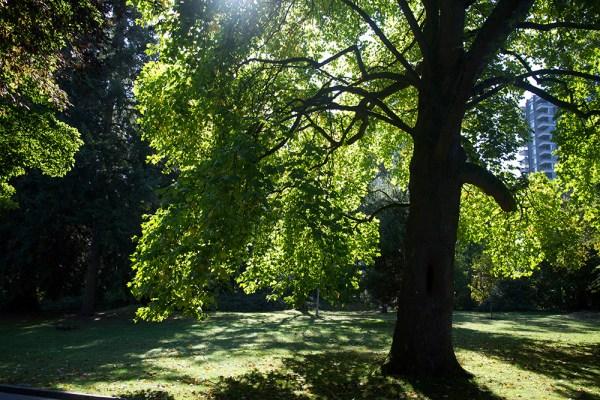 00 sunlight thru trees