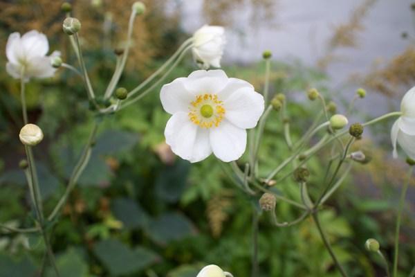 02 white flower