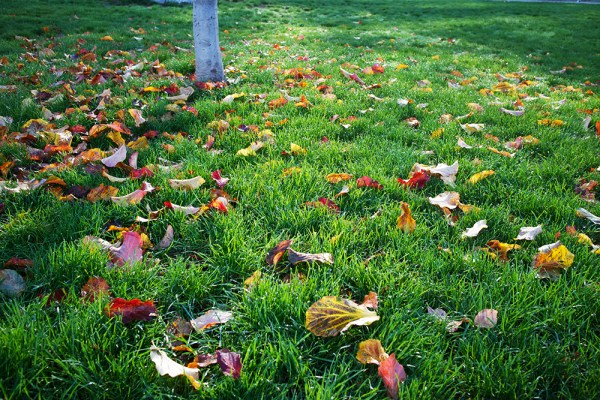 02 autumn leaves in grass