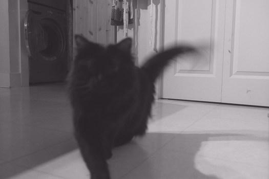 04 shadow cat