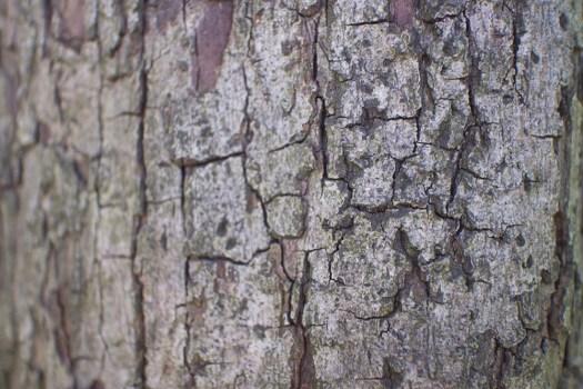 04bark texture