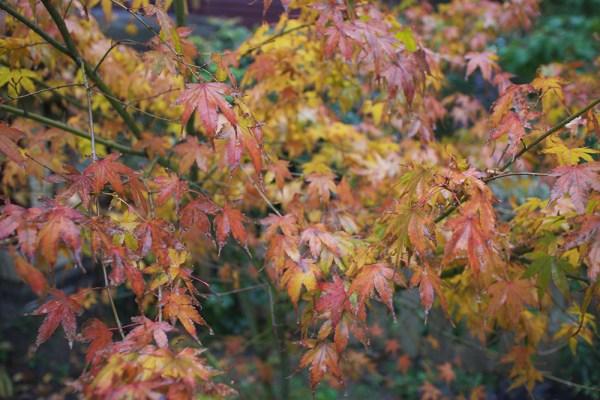 01-autumn-leaves