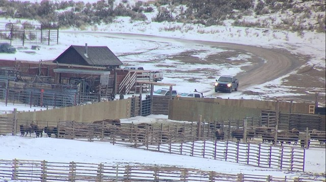 Three Arrested in Action to Stop Buffalo Slaughter in Yellowstone