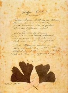 Goethe ginkgo biloba