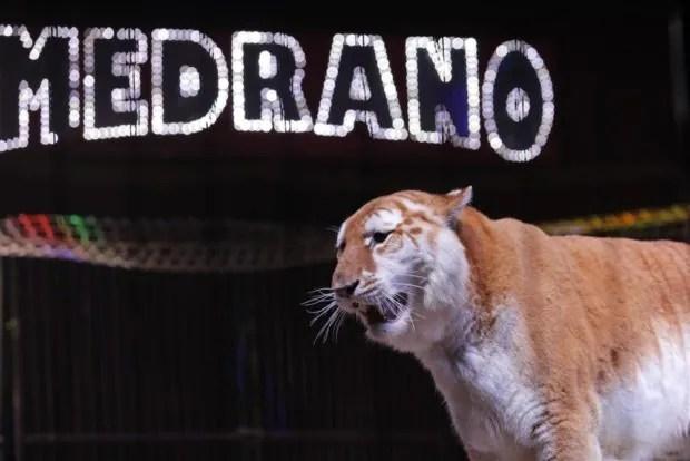 Le Cirque Medrano présente Aladdin et les 1001 nuits ! Coutances