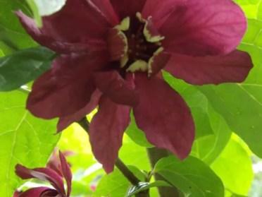 De création récente, les collections du Jardins d'Ewen se nichent au pied de vieux talus plantés