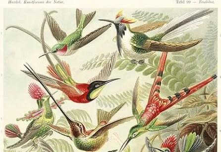 Trochilidae_Colibris_Kunstformen-der-Natur