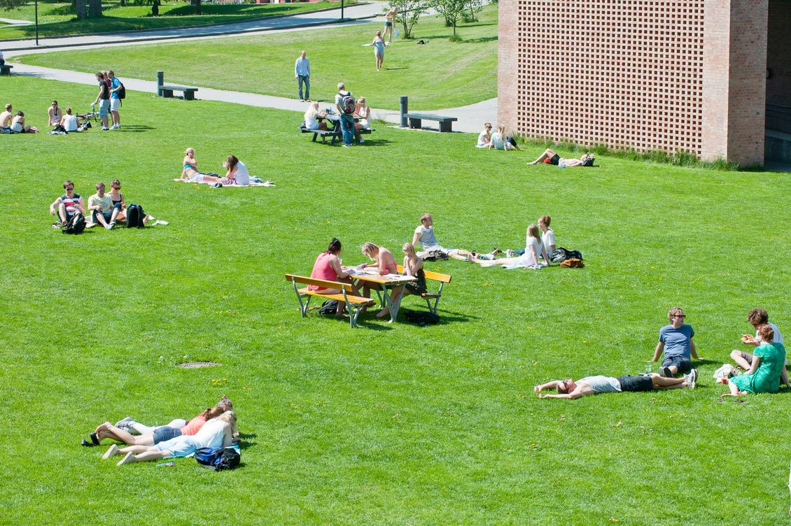 Fra nestenging til studiestart – hvordan blir første semester?