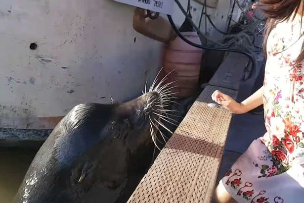 Injuries To Girl In Viral Sea Lion Video Are Much Worse Than Expected Sea Lion snatches little girl off pier in Canada 2