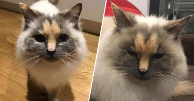 Cat With 'Penis' On Its Face Looking For Forever Home dickhead