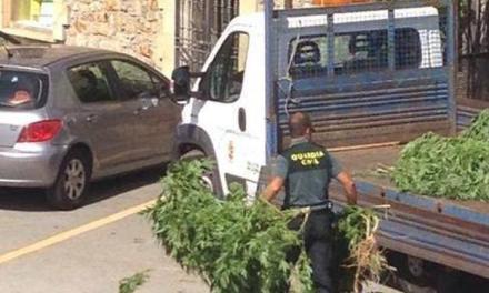 UnionGC se queja del tratamiento de las incautaciones de marihuana en Cantabria