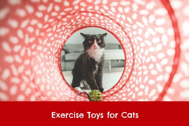 exercise toys for cats