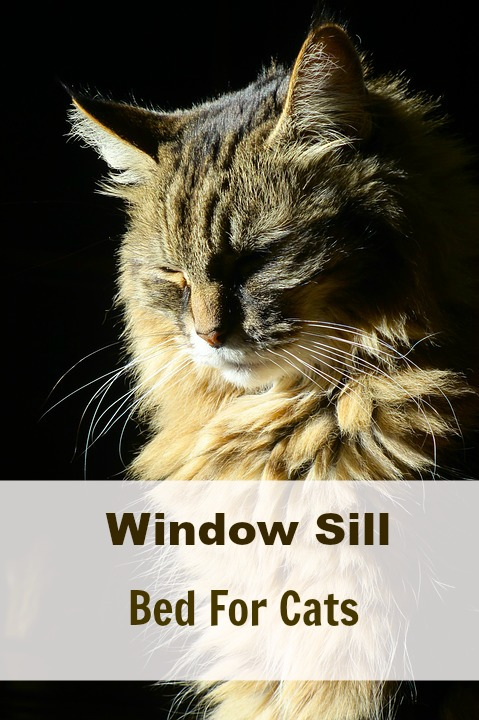 window sill bed for cats