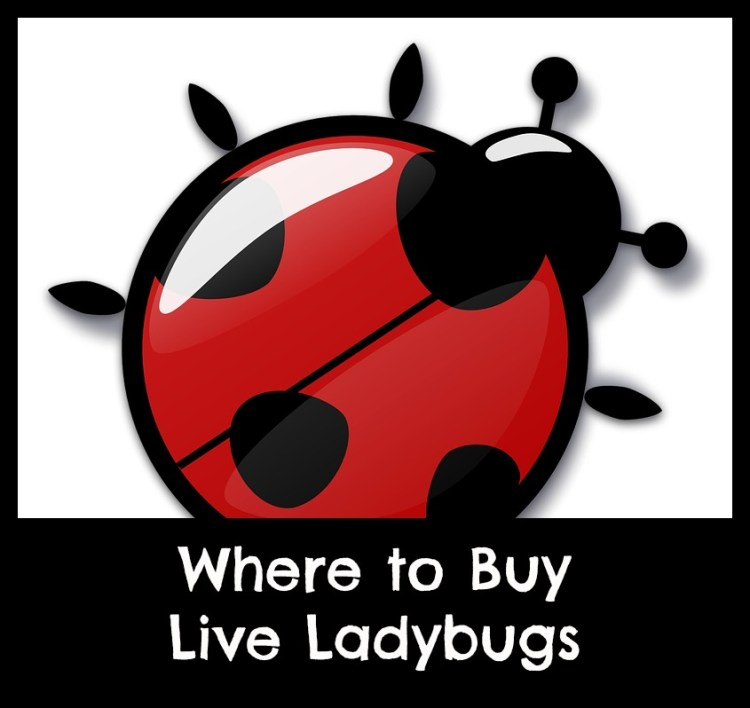 ladybugs for sale online