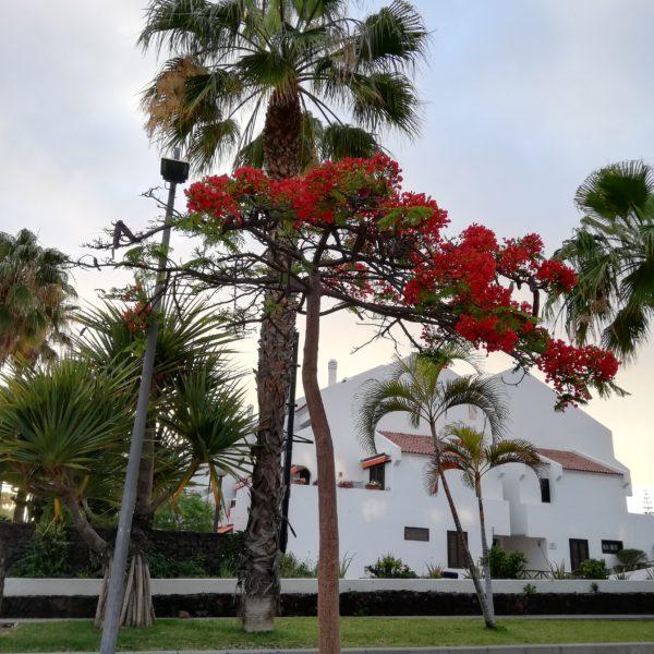 IMG 20190517 202208 Tenerife - dincolo de mitul vacanței de lux