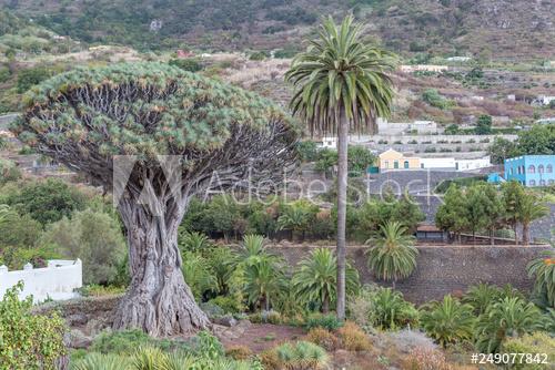 500 F 249077842 XBKlgBCYcZkObv2NnosTfFkTkmdXNcql Atracții și activități într-un sejur din Tenerife (2)