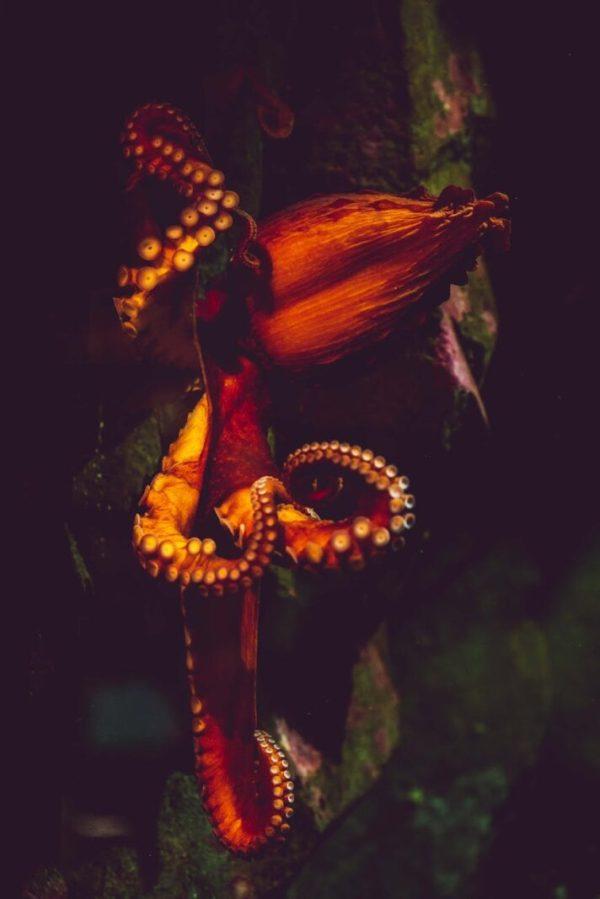 pexels photo 2902860 Noi rețete autentice: caracatiță și papas arrugadas