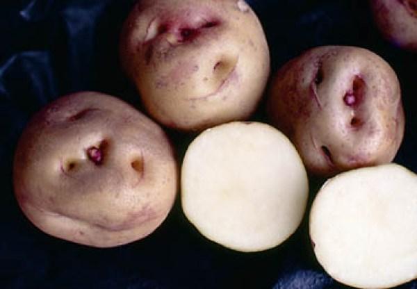 22 Călătorie și gastronomie: cartofii antici canarieni