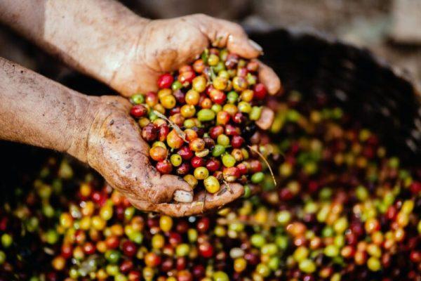 pexels photo 1459339 6 moduri de preparare a cafelei