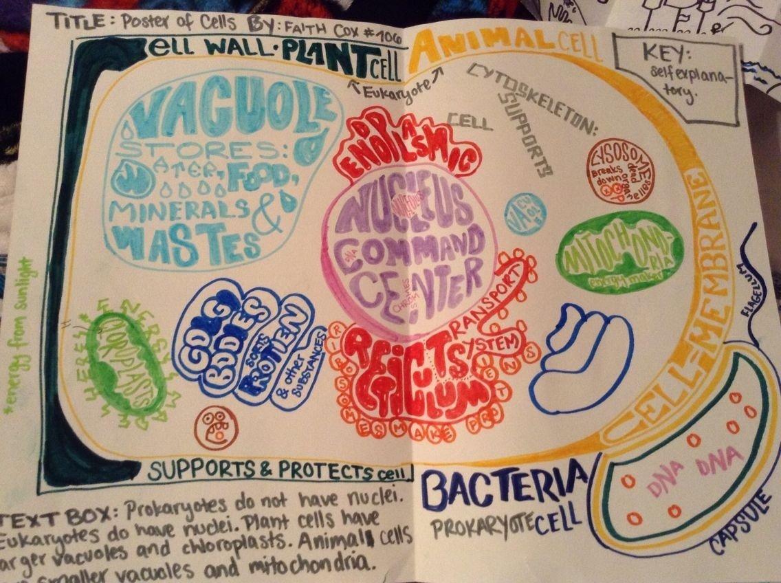 10 Cute Biology Project Ideas For High School