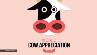 Cow Appreciation Day messages to send to spread awareness about the day