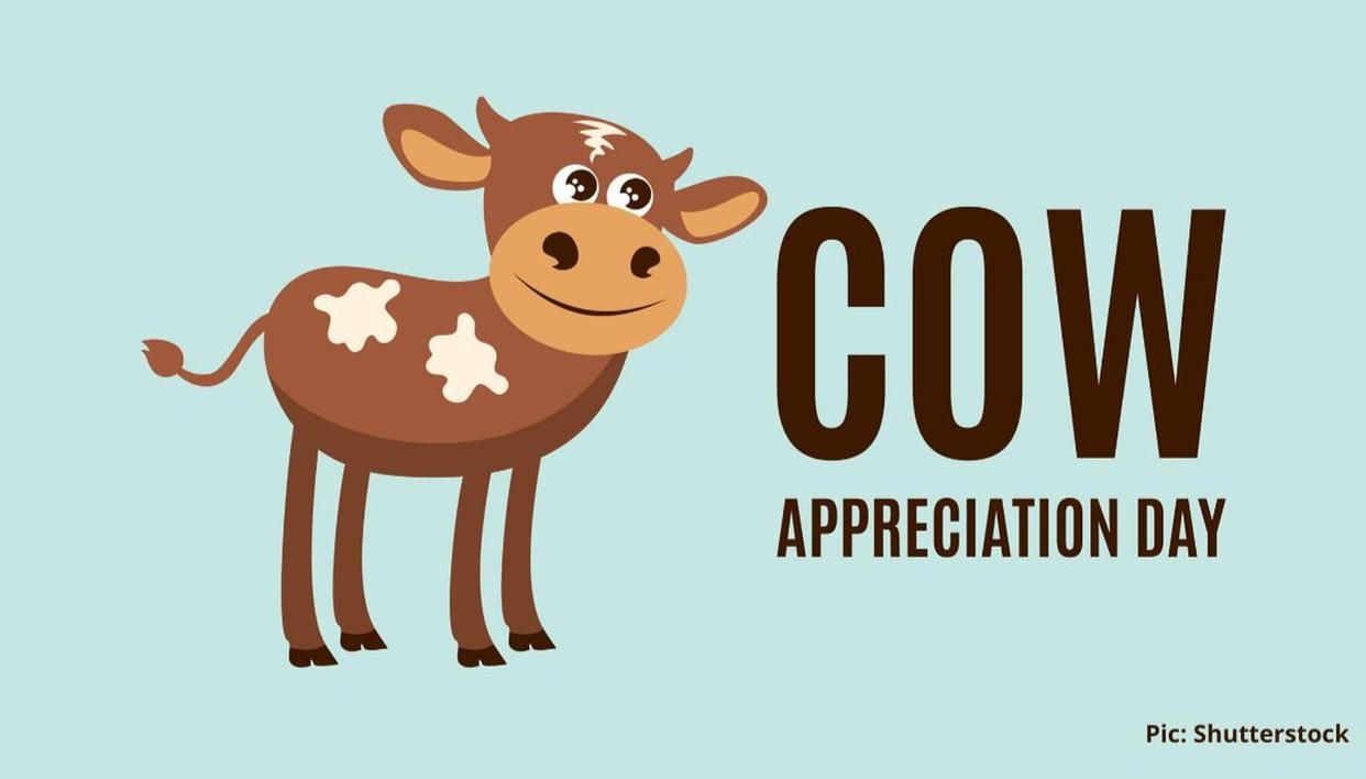 Cow Appreciation Day quotes to share with your friends and family