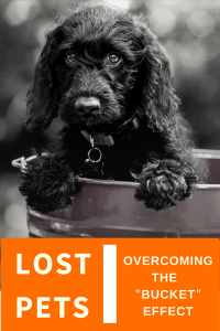 Supporting An Integrated Lost/Found Pet Registry