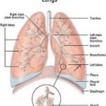 mesothelioma symptoms, types, diagnosis, and treatmentmesothelioma