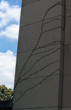IMG_4162_exterior-wall_1900