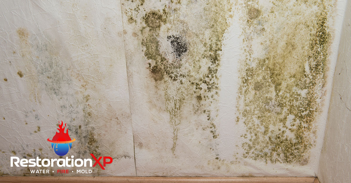 Certified mold restoration in Plano, TX
