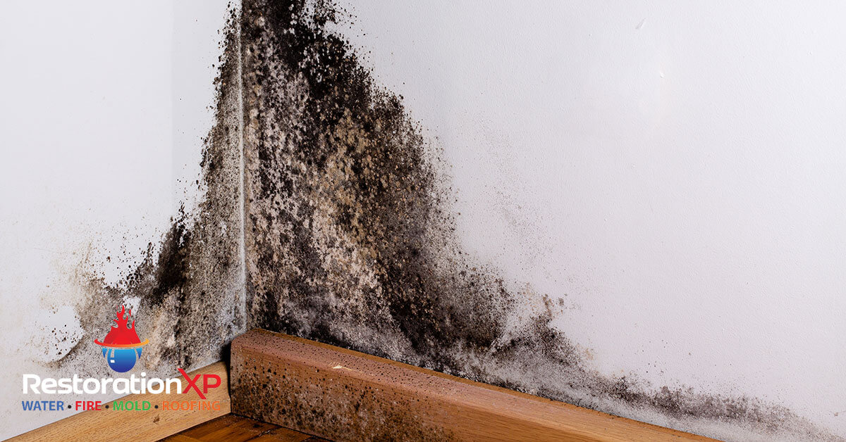 Certified mold remediation in Whitewright, TX