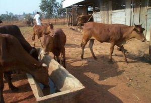 La FASA au centre du dispositif national de formation supérieure agronomique
