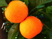 oranger_200