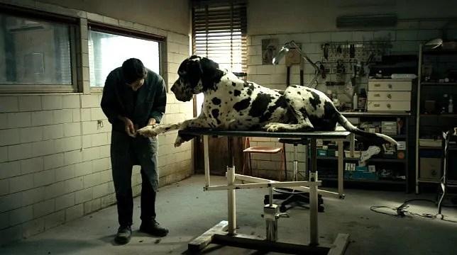 Dogman | Matteo Garrone | Uscita | Trailer | Trama | Canaro della Magliana