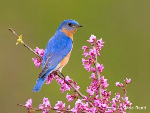نتيجة بحث الصور عن الطائر الأزرق