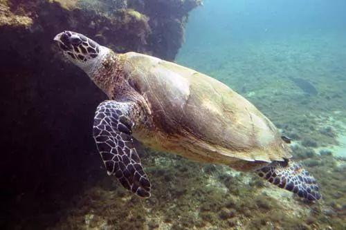 الحيوانات البحرية التي تعيش في الحاجز المرجاني العظيم
