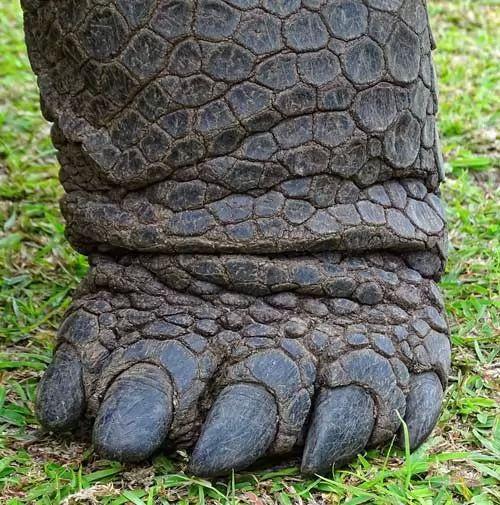 سلحفاة ألدابرا العملاقة احد اكبر انواع السلاحف في العالم